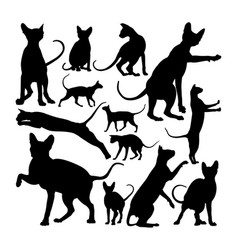 adorable sphynx cat animal silhouettes vector image