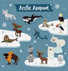 Arctic animal cartoon vector
