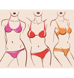 Beautiful woman bodies in bikini vector