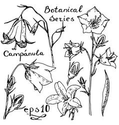 Campanula botanic series vector