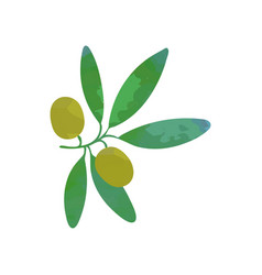 clipart of branch with green olives and leaves vector image