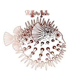 Graphic puffer fish vector