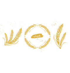 Wheat barley rye grain set vector