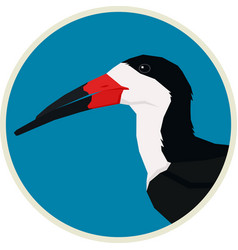 black skimmer bird round frame vector image
