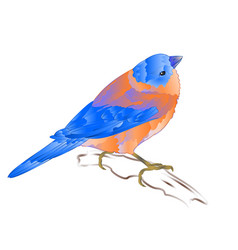 Bluebird small thrush songbirdon vector