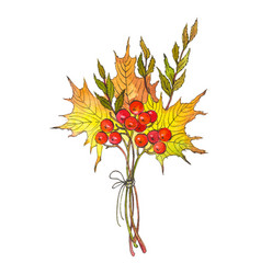 watercolor drawing autumn bouquet vector image