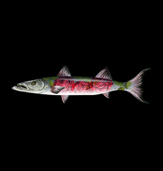 Fish barracuda with roses vector