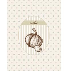Garlic vector