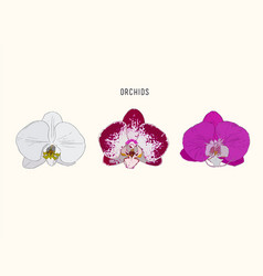 hand drawn set with orchid flowers vector image