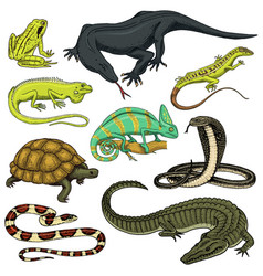 set reptiles and amphibians wild crocodile vector image