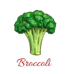 Broccoli vegetarian vegetable sketch icon vector image