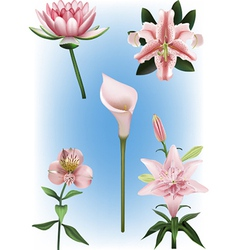 Collection of lily vector image