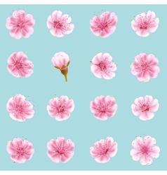 Sakura flowers icon set isolated EPS 10 vector image vector image