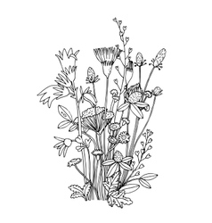 Sketch of the wildflowers on a white background vector