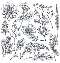 collection of hand drawn spring flowers and plants vector image