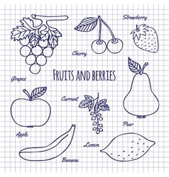 Hand draw fruits and berry vector
