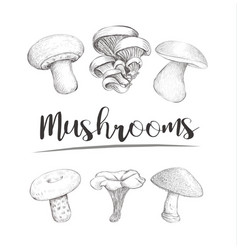 Mushrooms sketch hand vector