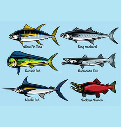 Set of colored fish vector