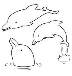 set of dolphin vector image