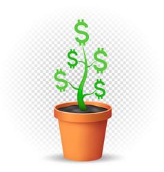 dollar plant grows in flowerpot vector image