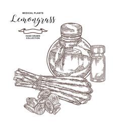 lemongrass plant isolated on white background vector image