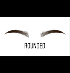 Medium rounded hand drawn brows shape vector
