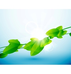 Nature leaves background vector image