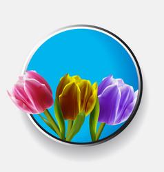 Trio of tulips over metallic border vector