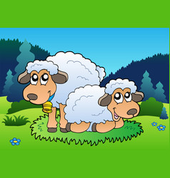 two sheep on meadow vector image