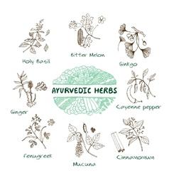 Ayurvedic herbs collection vector