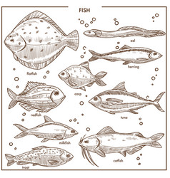 fish sketch species with names isolated vector image