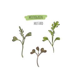 Hand drawn mustard micro greens vector