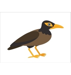 ommon myna vector image