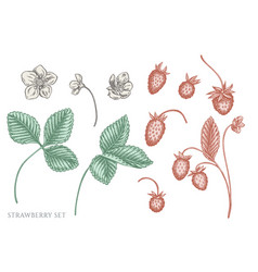 set hand drawn pastel strawberry vector image
