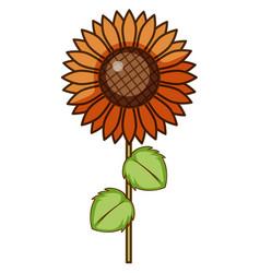 Single sunflower on white background vector
