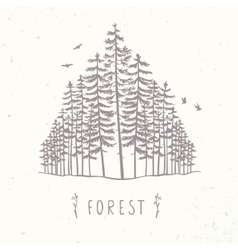 forest of tall trees vector image vector image