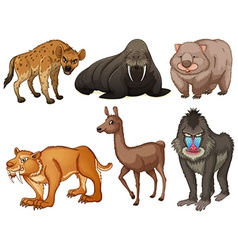 Rare animals vector