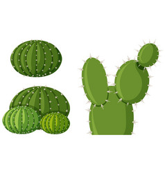 Three types of cactus plants vector