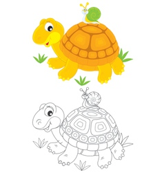 Tortoise and snail vector image