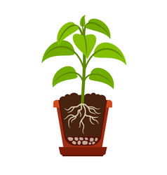 houseplant with roots icon vector image