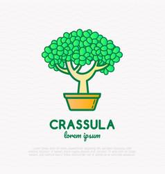 bonsai crassula plant thin line icon vector image