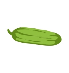 Fresh green cucumber isolated vector image