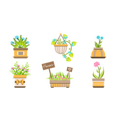 indoor and outdoor potted plants set home or vector image