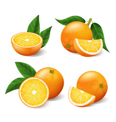 realistic bright yellow oranges with green leaf vector image