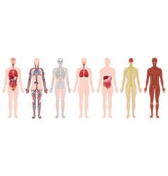 Set human body and anatomy vector