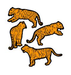 tigers wild cat set orange safari tiger vector image
