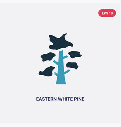 Two color eastern white pine tree icon from vector