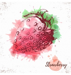 Watercolor strawberry sketch vector image