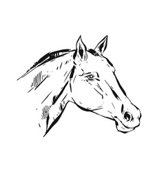 hand drawn lined ink graphic horse head vector image vector image