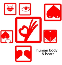 red icon human body and heart love concept vector image